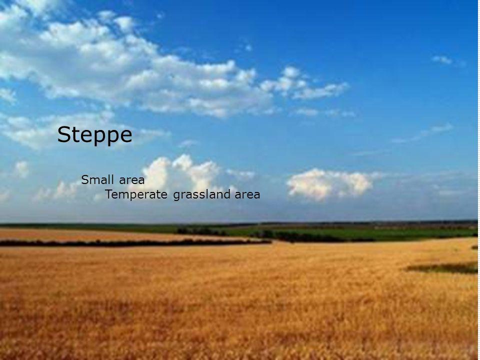 Steppe Small area Temperate grassland area