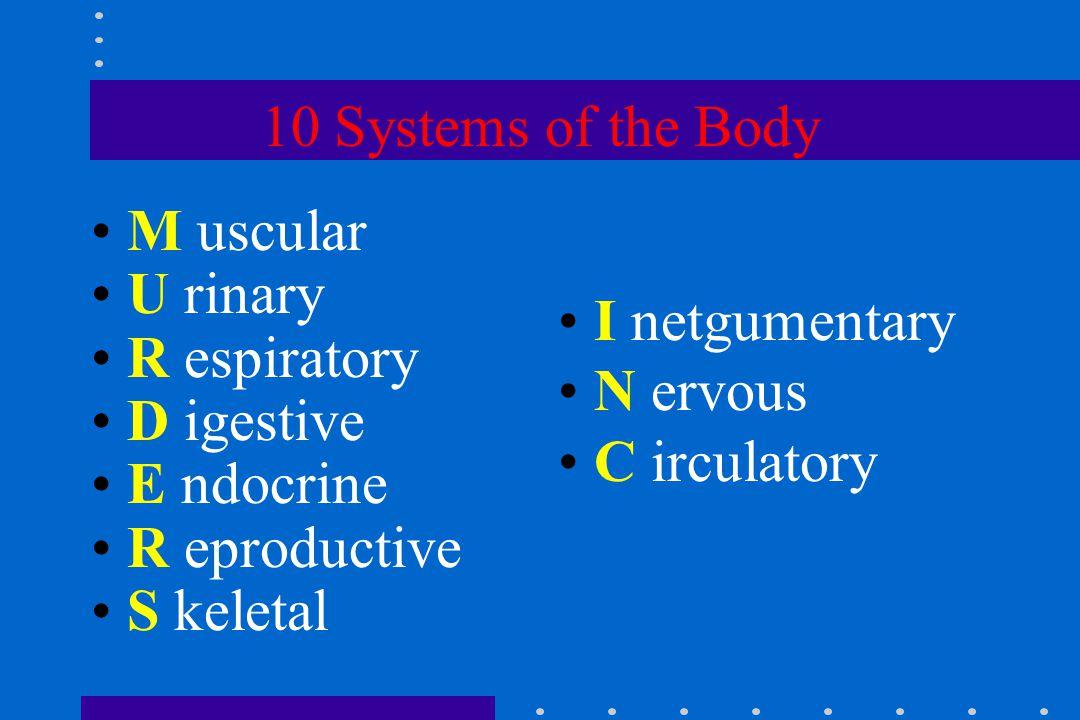 10 Systems of the Body M uscular U rinary R espiratory D igestive E ndocrine R eproductive S keletal I netgumentary N ervous C irculatory