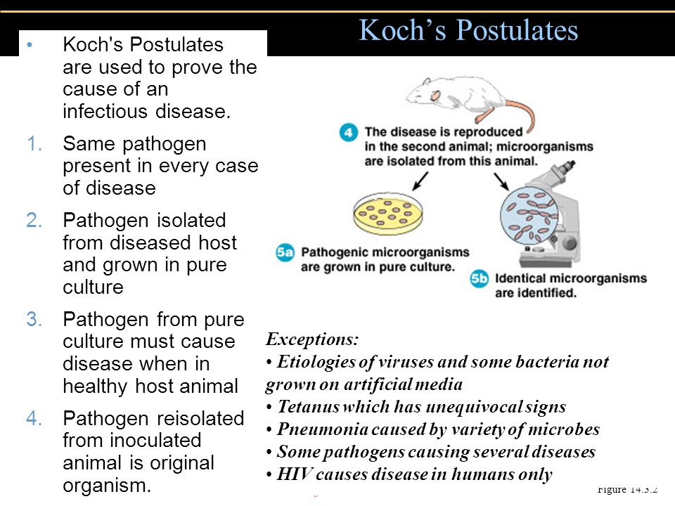 Copyright © 2004 Pearson Education, Inc., publishing as Benjamin Cummings Koch s Postulates are used to prove the cause of an infectious disease.