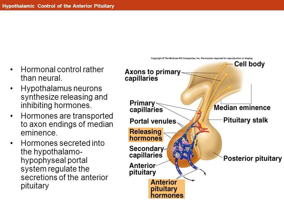 Hypothalamic Control of the Anterior Pituitary Hormonal control rather than neural.