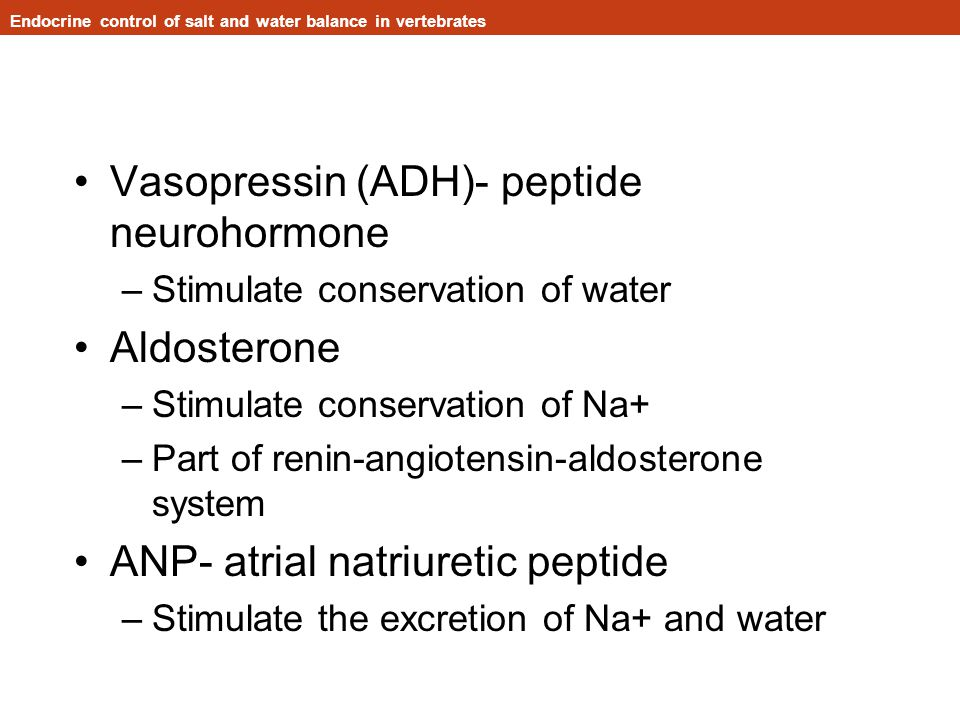 Vasopressin (ADH)- peptide neurohormone –Stimulate conservation of water Aldosterone –Stimulate conservation of Na+ –Part of renin-angiotensin-aldosterone system ANP- atrial natriuretic peptide –Stimulate the excretion of Na+ and water Endocrine control of salt and water balance in vertebrates