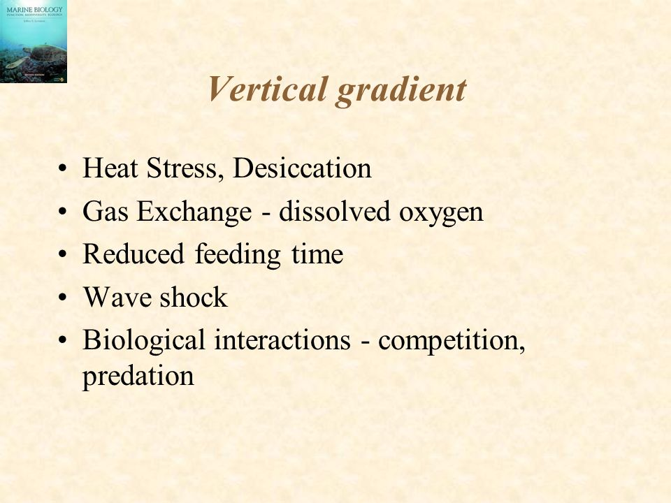 Heat Stress/Desiccation Varies on small spatial scales Body size, shape are both important - reduction of surface area/volume reduces heat gain and water loss Evaporative cooling and circulation of body fluids aids in reduction of heat loss Well sealed exoskeletons aid in retarding water loss (acorn barnacles, bivalves)