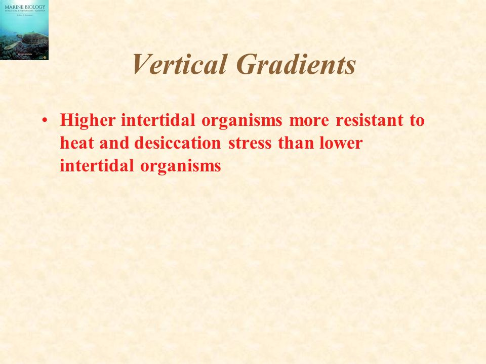 Vertical Gradients 2 Higher intertidal organisms more resistant to heat and desiccation stress than lower intertidal organisms Higher intertidal animals have less time to feed.