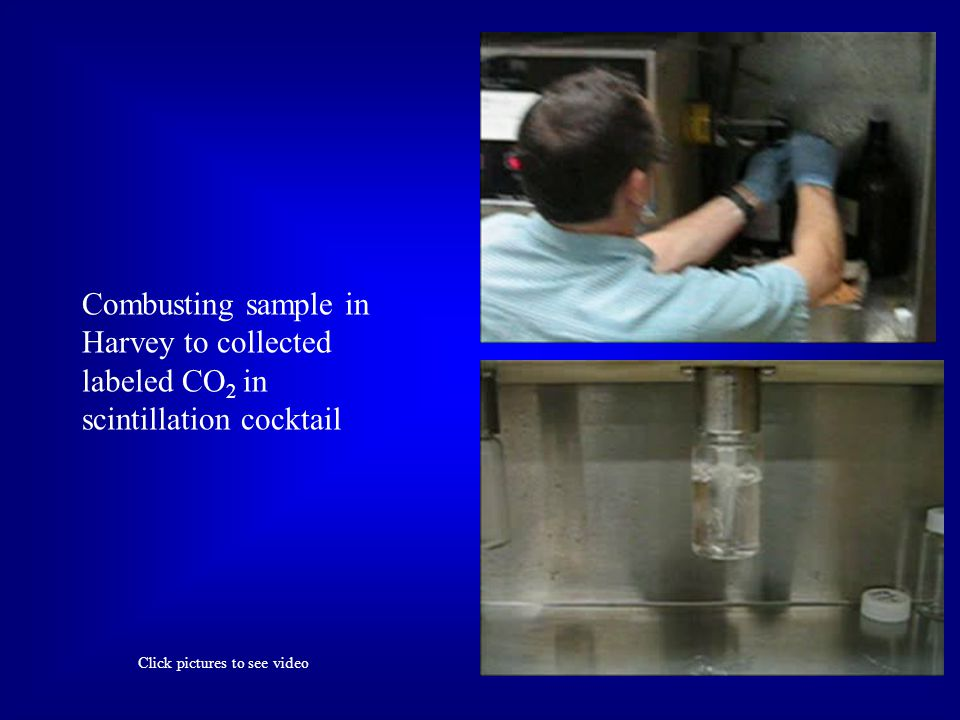 Combusting sample in Harvey to collected labeled CO 2 in scintillation cocktail Click pictures to see video