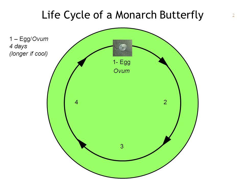 2 Life Cycle of a Monarch Butterfly 1- Egg Ovum 2 3 4 1 – Egg/Ovum 4 days (longer if cool)