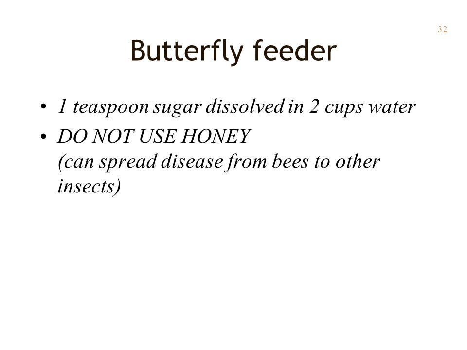 32 Butterfly feeder 1 teaspoon sugar dissolved in 2 cups water DO NOT USE HONEY (can spread disease from bees to other insects)