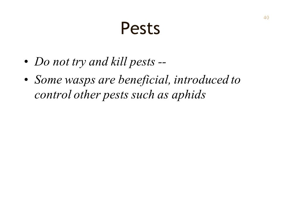 40 Pests Do not try and kill pests -- Some wasps are beneficial, introduced to control other pests such as aphids