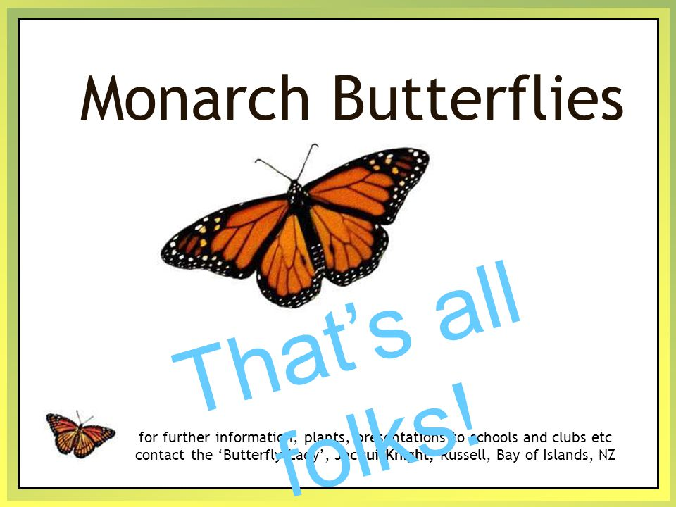Monarch Butterflies for further information, plants, presentations to schools and clubs etc contact the 'Butterfly Lady', Jacqui Knight, Russell, Bay of Islands, NZ T h a t ' s a l l f o l k s !