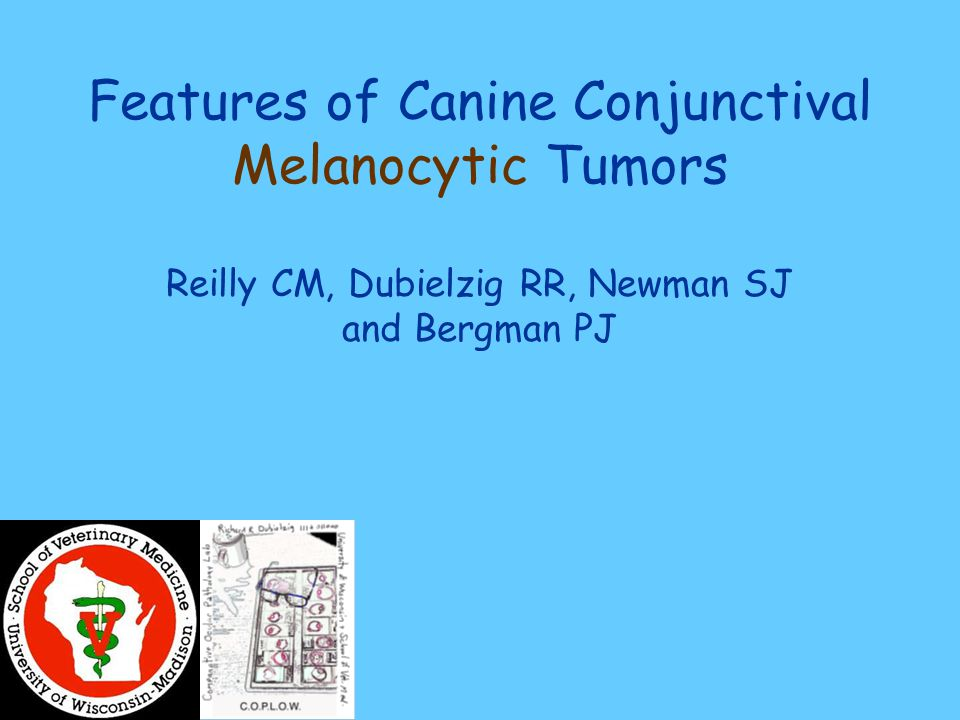 Features of Canine Conjunctival Melanocytic Tumors Reilly CM, Dubielzig RR, Newman SJ and Bergman PJ