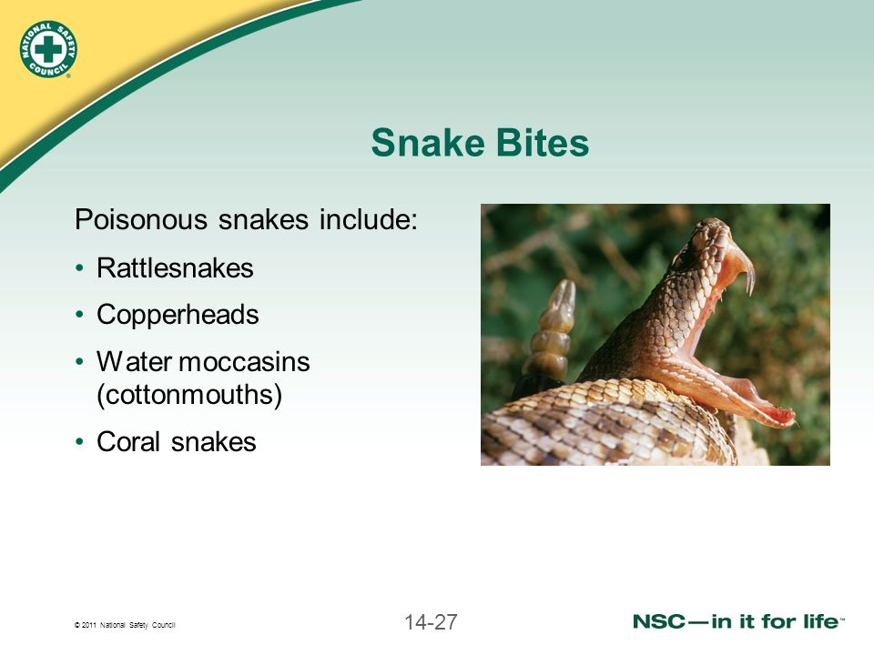 © 2011 National Safety Council 14-27 Snake Bites Poisonous snakes include: Rattlesnakes Copperheads Water moccasins (cottonmouths) Coral snakes