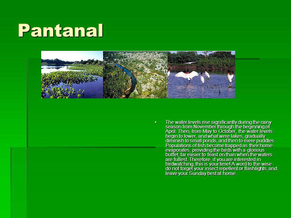 Pantanal  The water levels rise significantly during the rainy season from November through the beginning of April. Then, from May to October, the wa