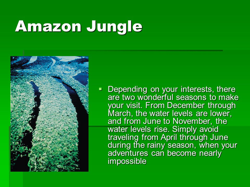 Amazon Jungle  Depending on your interests, there are two wonderful seasons to make your visit. From December through March, the water levels are low
