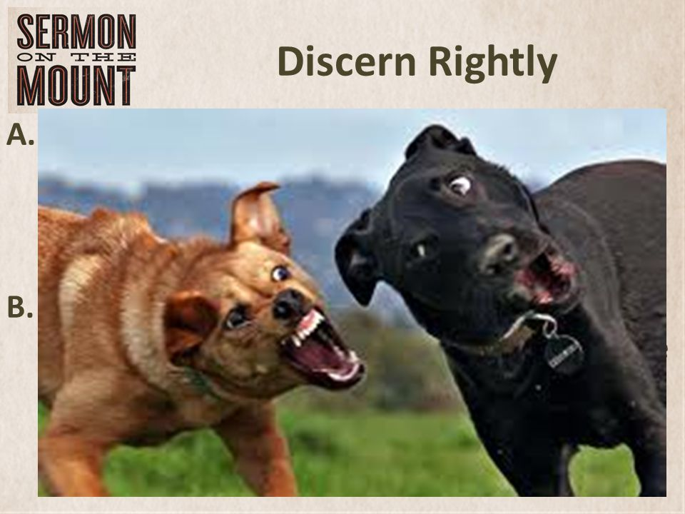 Discern Rightly A.When my brothers and I were growing up, our family had several pet dogs.