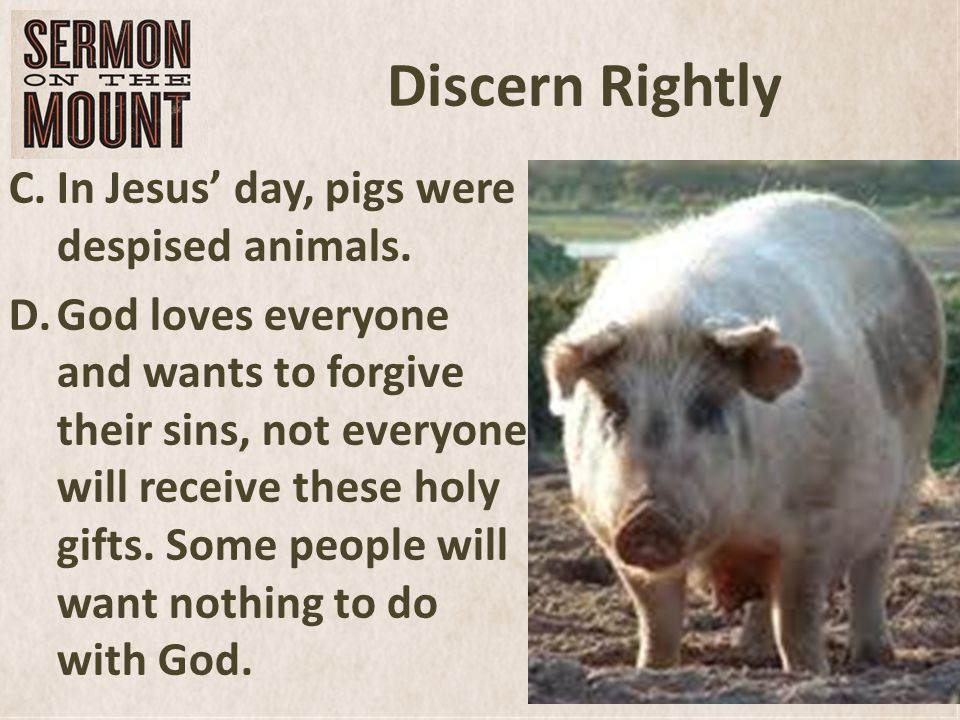 Discern Rightly C.In Jesus' day, pigs were despised animals.