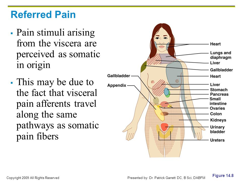 Copyright 2009 All Rights Reserved Presented by: Dr. Patrick Garrett DC, B Sci, DABFM Referred Pain  Pain stimuli arising from the viscera are percei