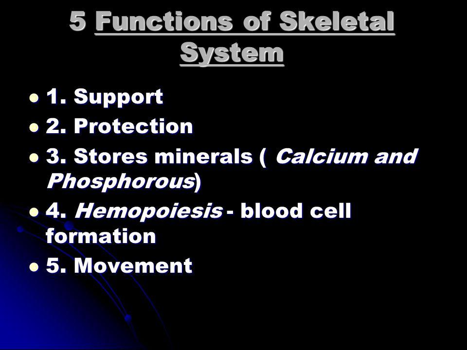 2 Divisions of Skeletal System 1. Axial - skull, vertebrae, ribs 1.