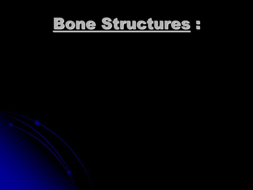 Sternum Sphenoid Bone