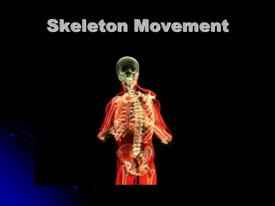 Bone Structures :