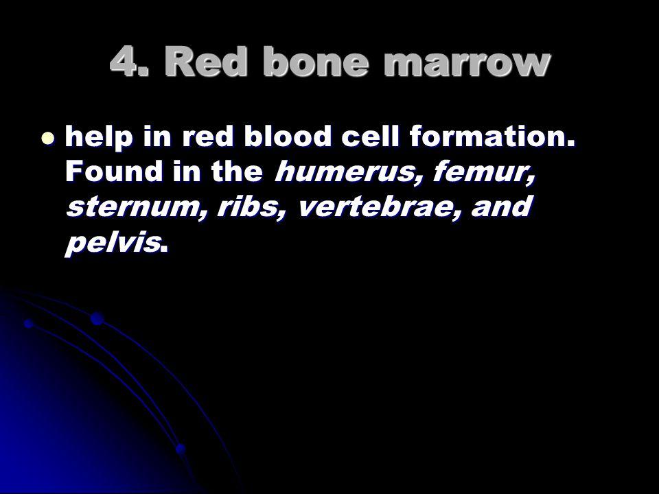 3. Compact bone dense, help give bones strength. dense, help give bones strength.