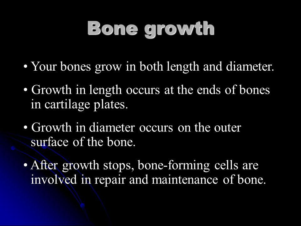 Bone Growth Bone cells do reproduce throughout life. Bone cells do reproduce throughout life.