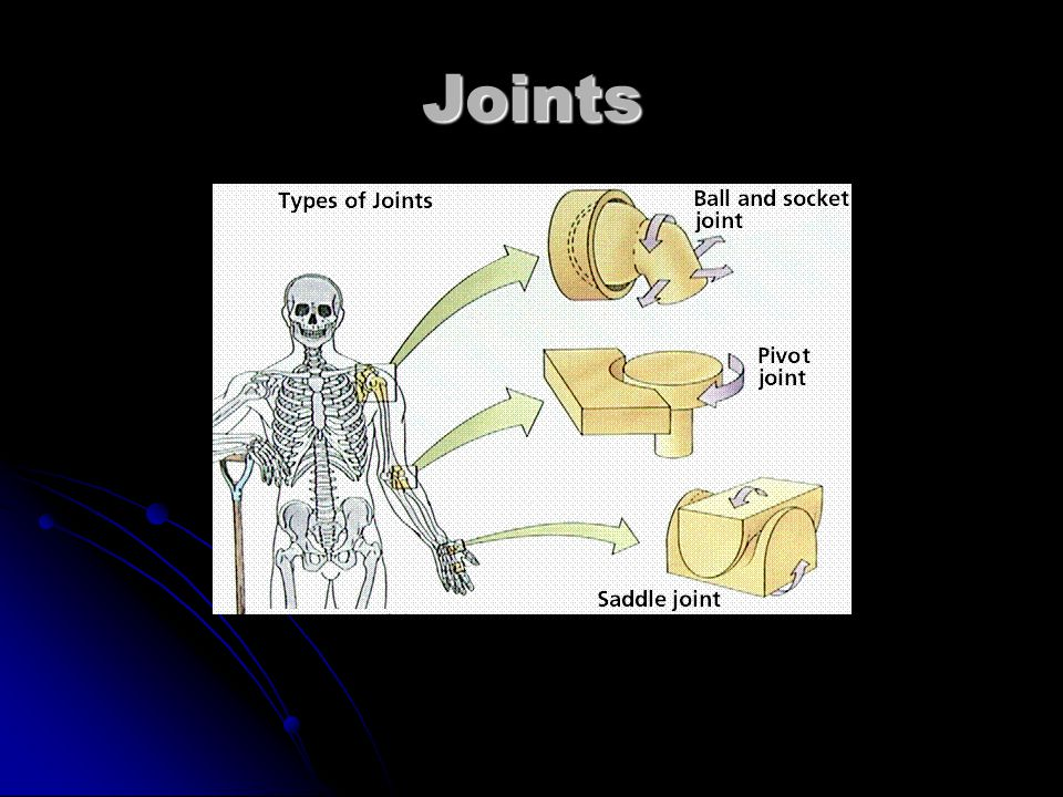 3 Joint Types: