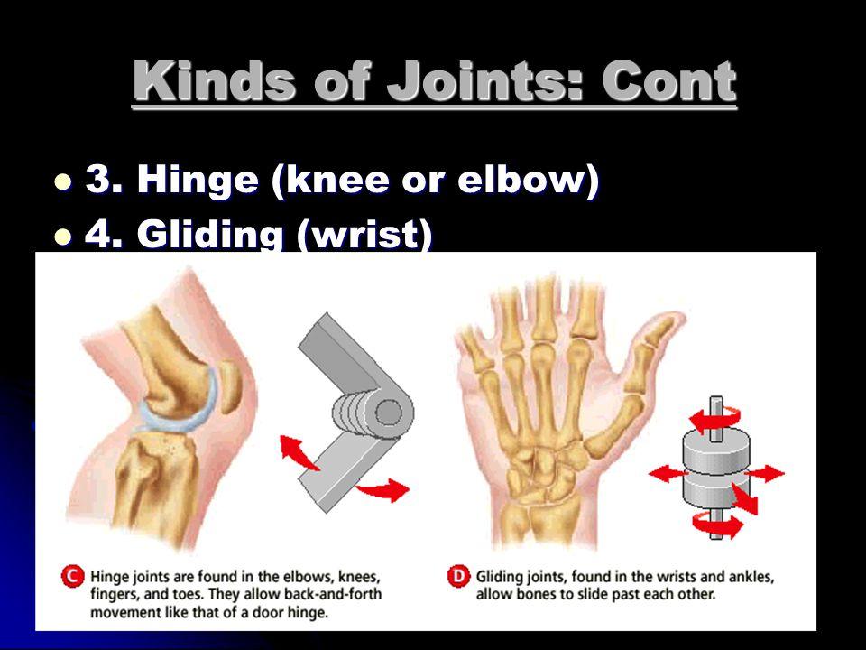 4 Kinds of Joints: 1. Ball and socket (hip or shoulder) 1.