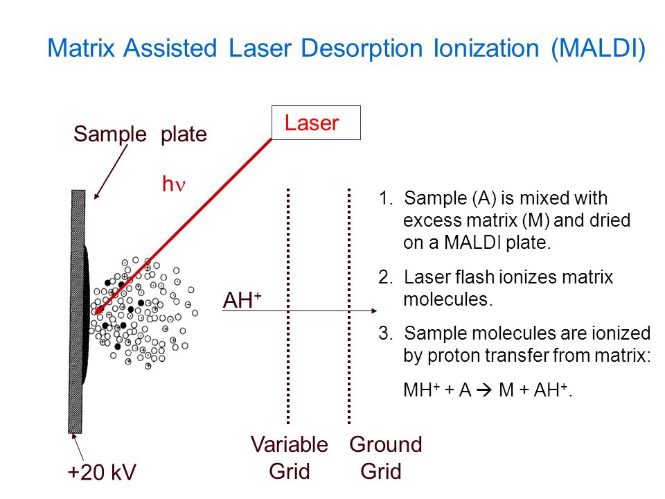Matrix Assisted Laser Desorption Ionization (MALDI) h Laser 1. Sample (A) is mixed with excess matrix (M) and dried on a MALDI plate. 2. Laser flash i