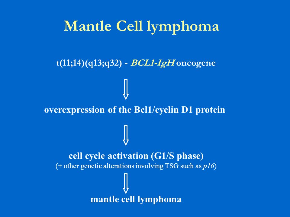 Mantle Cell lymphoma t(11;14)(q13;q32) - BCL1-IgH oncogene overexpression of the Bcl1/cyclin D1 protein cell cycle activation (G1/S phase) (+ other genetic alterations involving TSG such as p16) mantle cell lymphoma