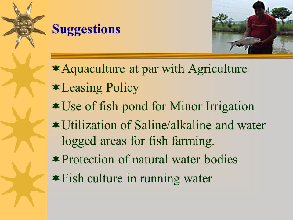 Suggestions  Aquaculture at par with Agriculture  Leasing Policy  Use of fish pond for Minor Irrigation  Utilization of Saline/alkaline and water logged areas for fish farming.