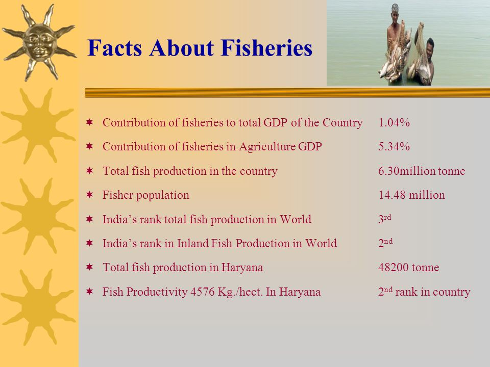 Facts About Fisheries  Contribution of fisheries to total GDP of the Country 1.04%  Contribution of fisheries in Agriculture GDP5.34%  Total fish production in the country6.30million tonne  Fisher population 14.48 million  India's rank total fish production in World3 rd  India's rank in Inland Fish Production in World2 nd  Total fish production in Haryana48200 tonne  Fish Productivity 4576 Kg./hect.
