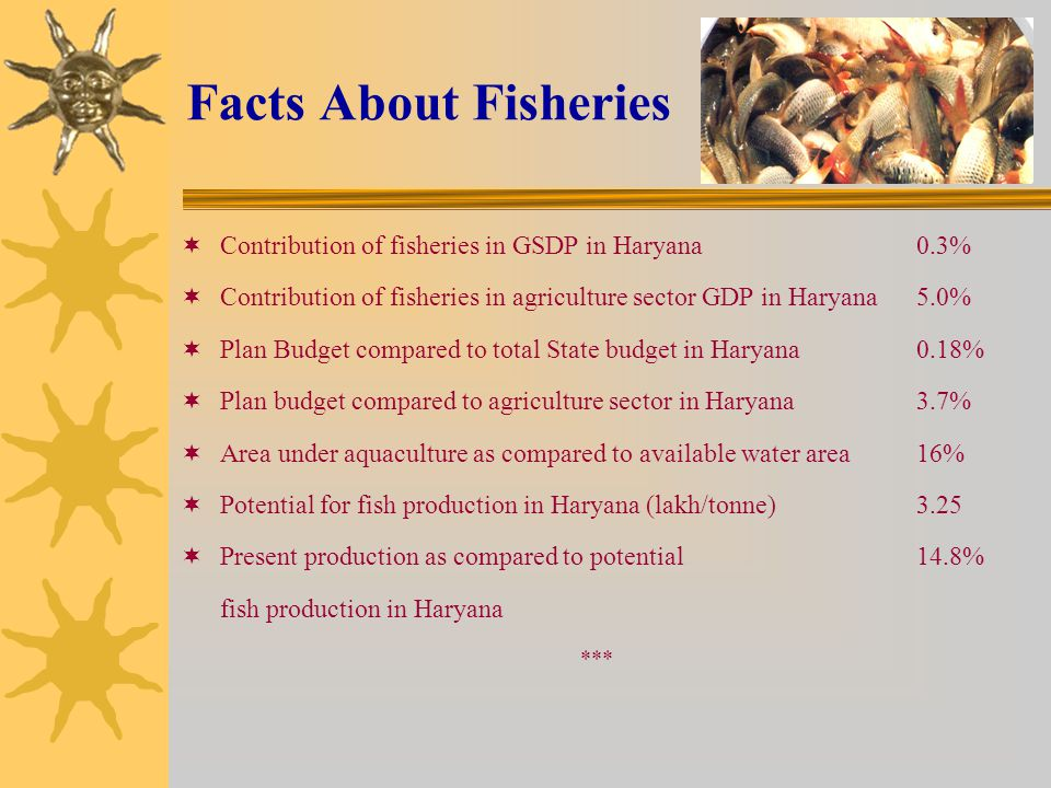 Facts About Fisheries  Contribution of fisheries in GSDP in Haryana 0.3%  Contribution of fisheries in agriculture sector GDP in Haryana5.0%  Plan Budget compared to total State budget in Haryana0.18%  Plan budget compared to agriculture sector in Haryana3.7%  Area under aquaculture as compared to available water area16%  Potential for fish production in Haryana (lakh/tonne)3.25  Present production as compared to potential 14.8% fish production in Haryana ***