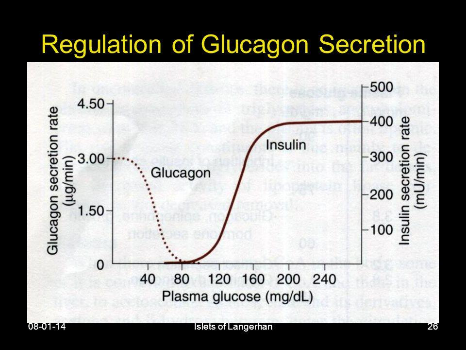 08-01-14Islets of Langerhan26 Regulation of Glucagon Secretion