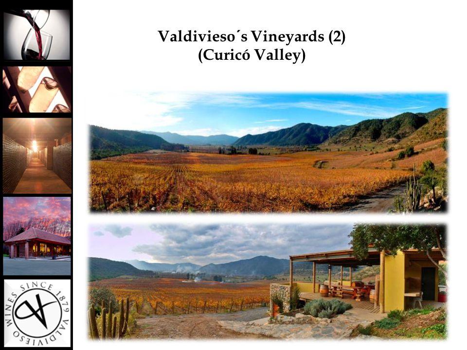 Valdivieso´s Vineyards (2) (Curicó Valley)