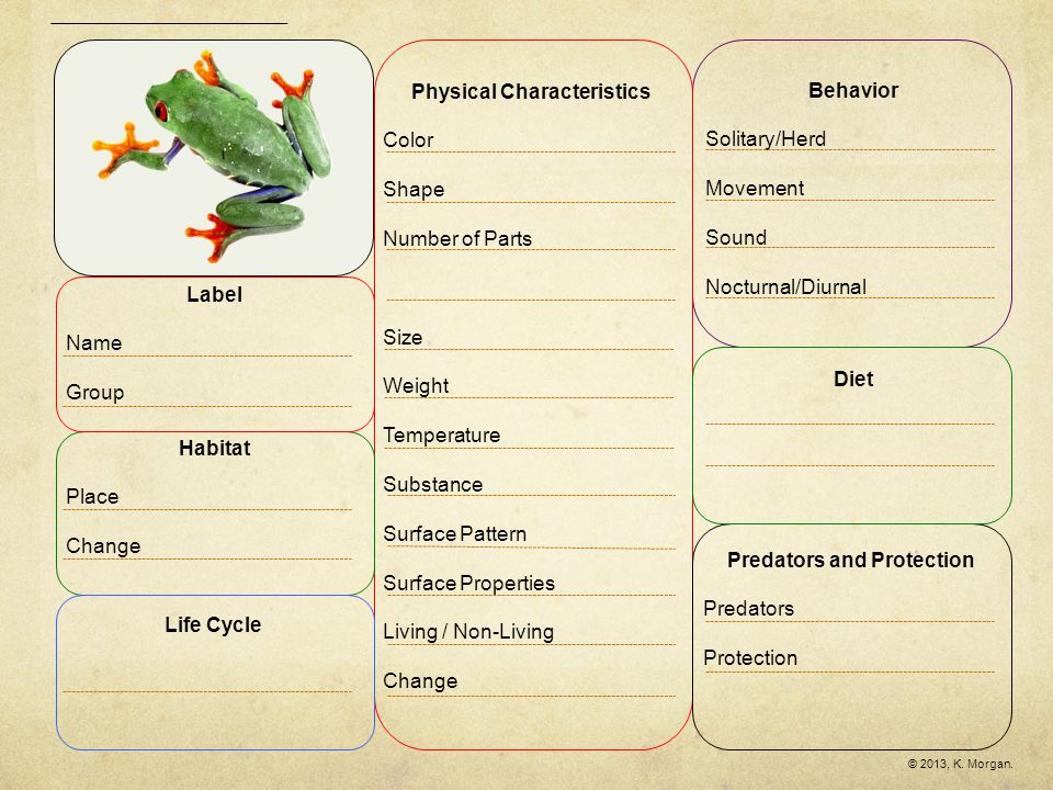 Tree FrogGreen Iguana Similarities & Differences Circle the words in which the two items are similar.