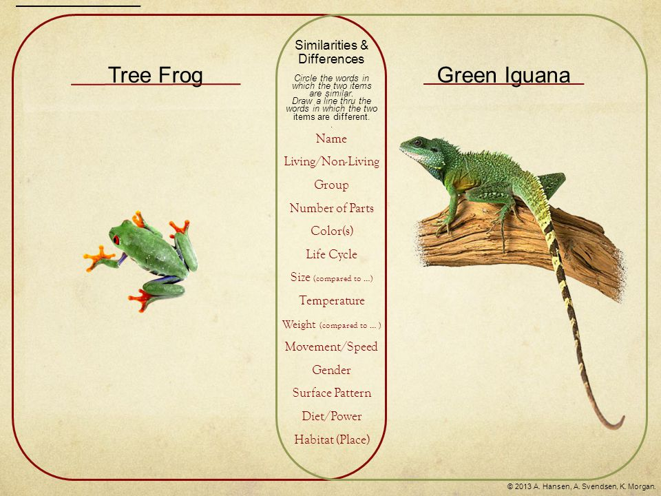 Tree FrogGreen Iguana Similarities & Differences Circle the words in which the two items are similar. Draw a line thru the words in which the two item