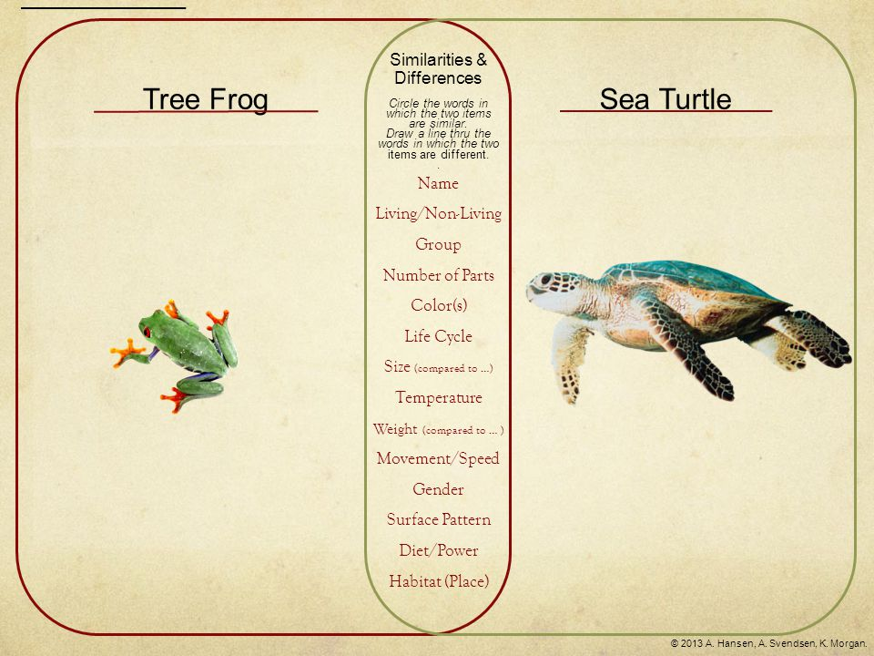 Tree FrogSea Turtle Similarities & Differences Circle the words in which the two items are similar. Draw a line thru the words in which the two items