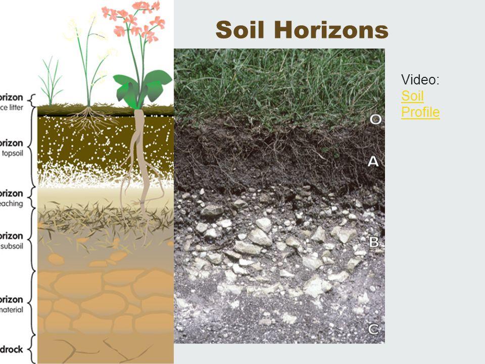 Soil Horizons Video: Soil Profile Soil Profile