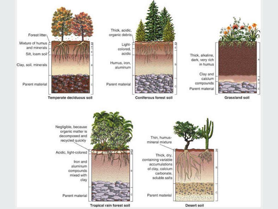 Soil Profiles (Biomes)