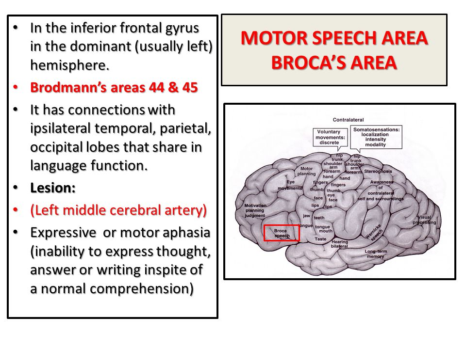 MOTOR SPEECH AREA BROCA'S AREA In the inferior frontal gyrus in the dominant (usually left) hemisphere. In the inferior frontal gyrus in the dominant