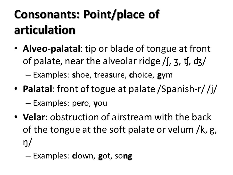 Alveo-palatal: tip or blade of tongue at front of palate, near the alveolar ridge /ʃ, ʒ, ʧ, ʤ/ sscg – Examples: shoe, treasure, choice, gym Palatal: f