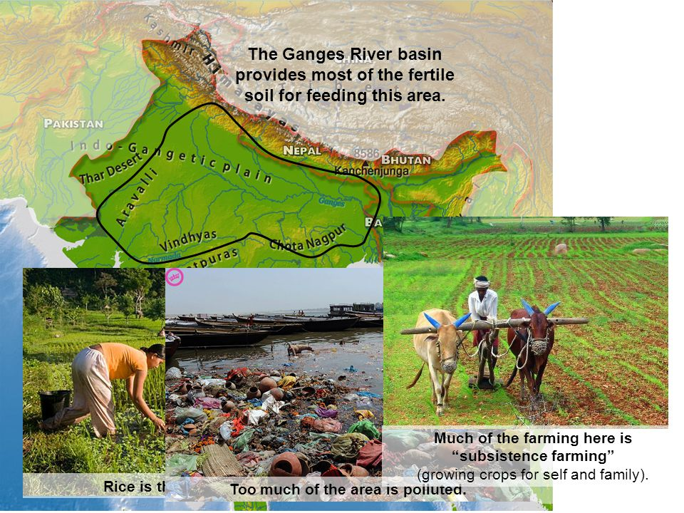 The Ganges River basin provides most of the fertile soil for feeding this area. Rice is the major crop of India. Too much of the area is polluted. Muc