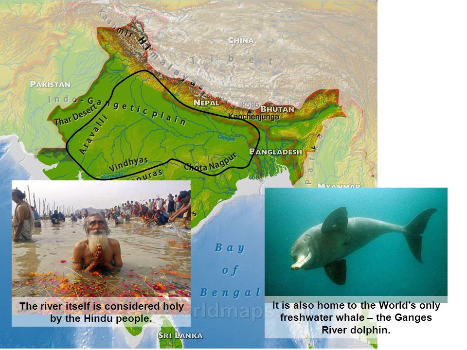 The river itself is considered holy by the Hindu people. It is also home to the World's only freshwater whale – the Ganges River dolphin.