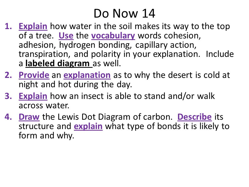 Do Now 14 1.Explain how water in the soil makes its way to the top of a tree.