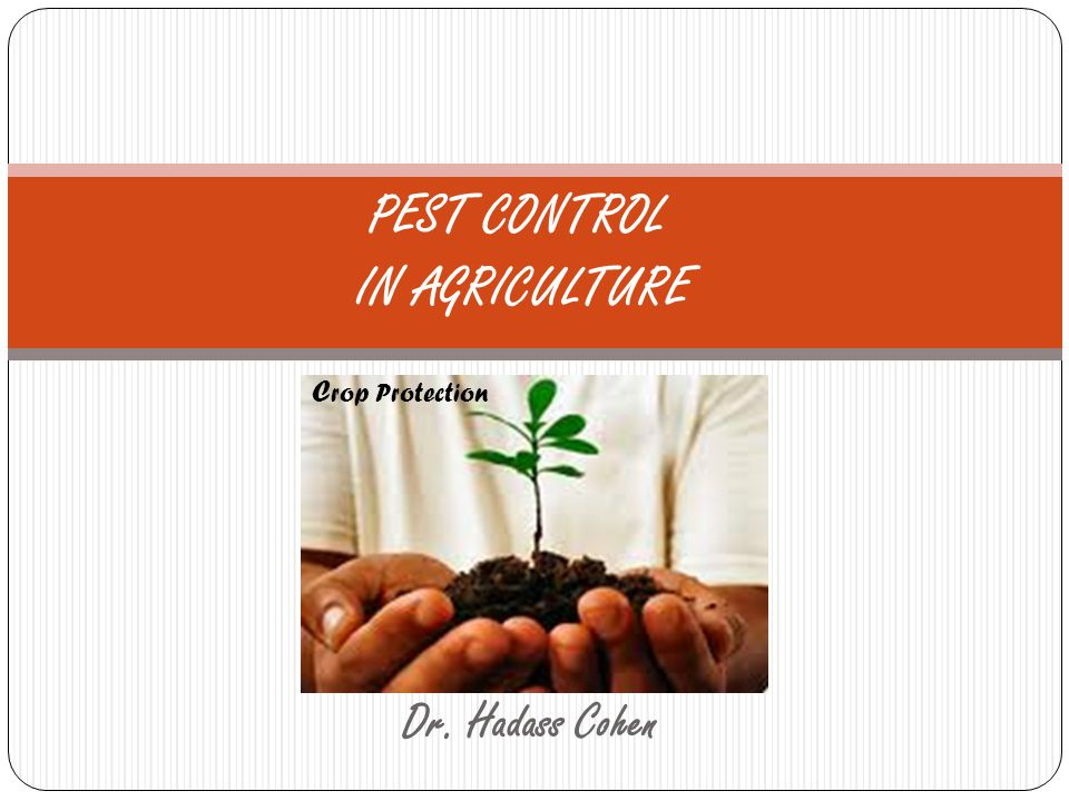 Dr. Hadass Cohen PEST CONTROL IN AGRICULTURE C rop Protection