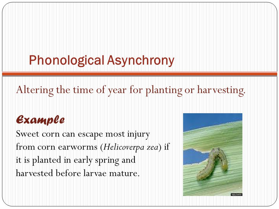 Phonological Asynchrony Altering the time of year for planting or harvesting. Example Sweet corn can escape most injury from corn earworms (Helicoverp