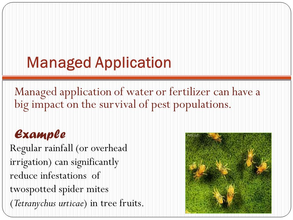 Managed Application Managed application of water or fertilizer can have a big impact on the survival of pest populations. Example Regular rainfall (or