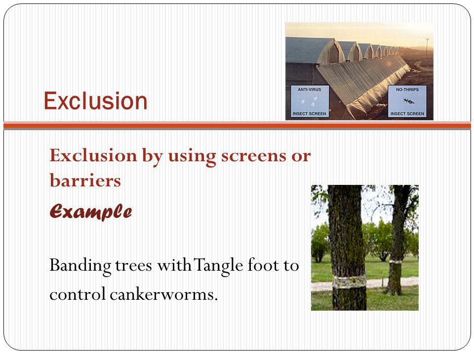 Exclusion Exclusion by using screens or barriers Example Banding trees with Tangle foot to control cankerworms.