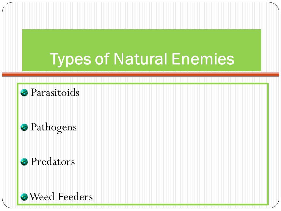 Types of Natural Enemies Parasitoids Pathogens Predators Weed Feeders