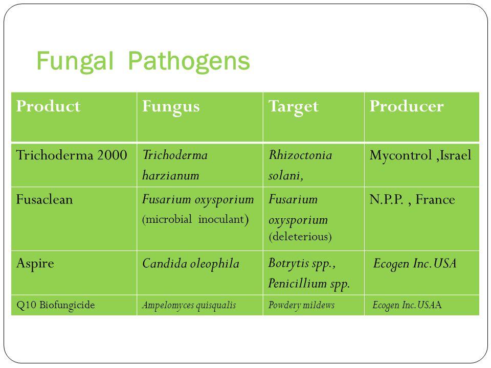 Fungal Pathogens ProducerTargetFungusProduct Mycontrol,IsraelRhizoctonia solani, Trichoderma harzianum Trichoderma 2000 N.P.P., FranceFusarium oxyspor