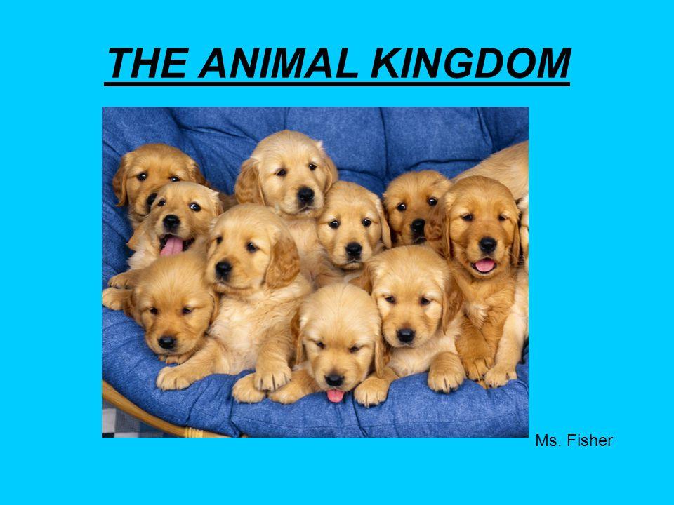 THE ANIMAL KINGDOM Ms. Fisher
